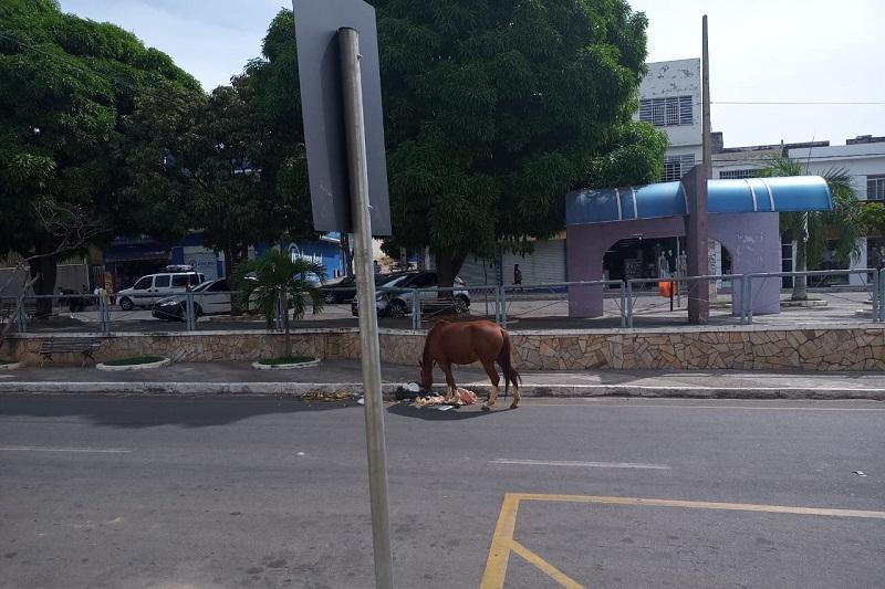 Brumado: Cavalo solto nas ruas quase provoca acidente na Praça Armindo Azevedo