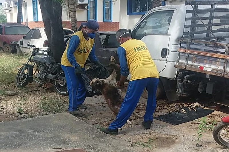 Morre 'Delegada', cachorra que vivia há anos dentro da sede da 20ª Coorpin em Brumado