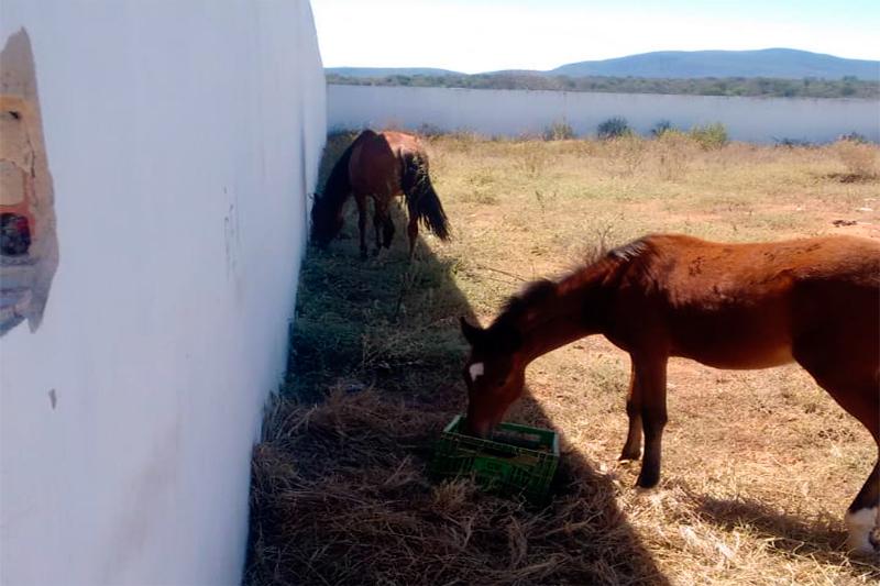 313a7d36b Os animais estão sendo guardados em terreno público, o que vem trazendo  transtornos aos moradores (Foto: Leitor 97NEWS)