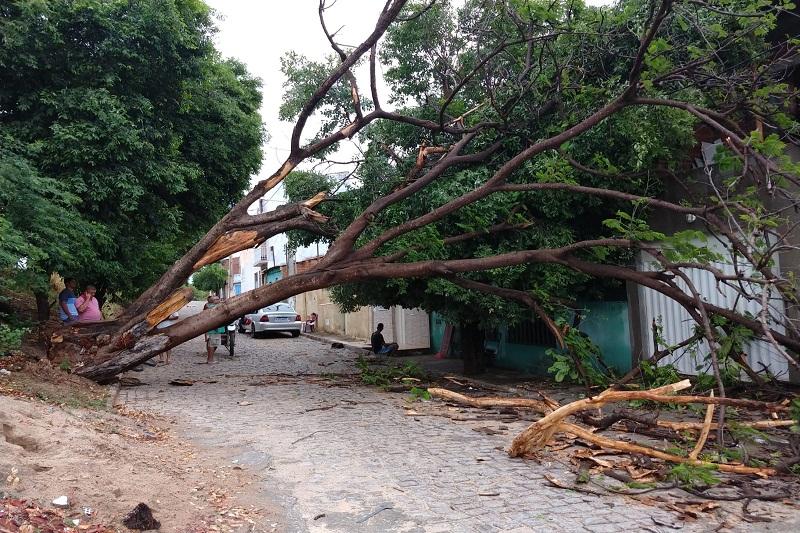 Brumado: Árvore cai em cima de casas no bairro Dr. Juracy