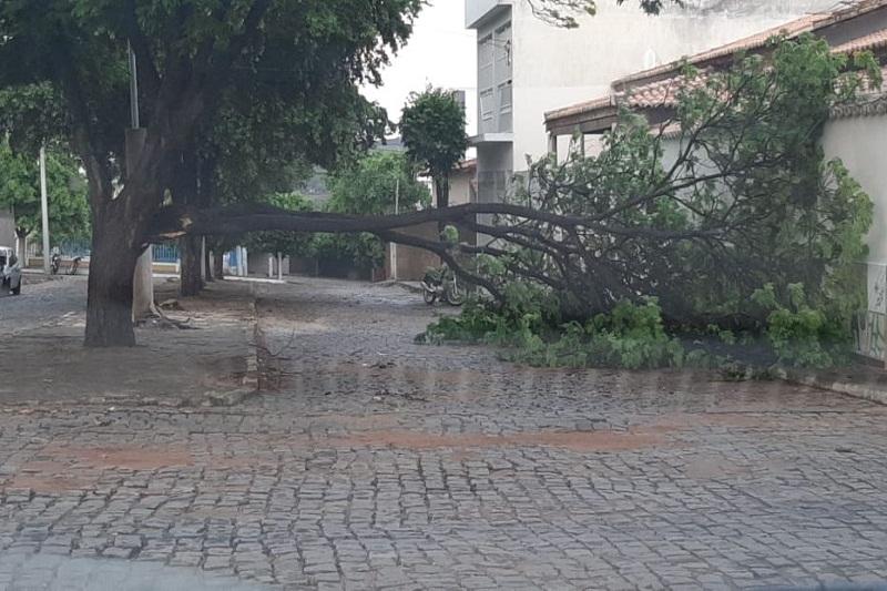Chuva derruba árvores e causa enxurrada em Brumado; veja o vídeo